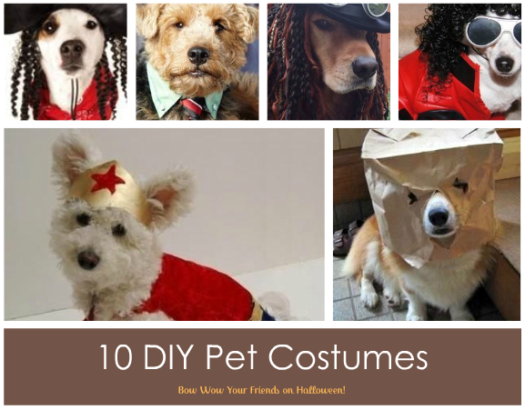 pet cotumes halloween recycle